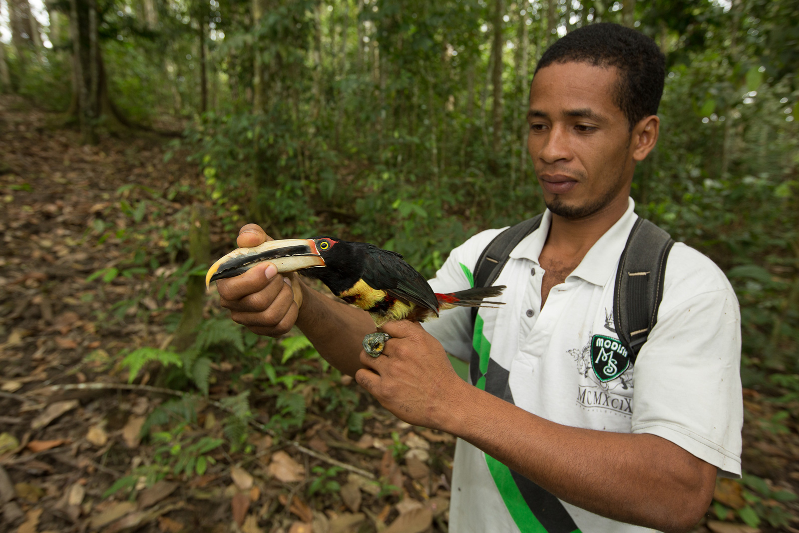 A researcher carefully examines a bird in the forest