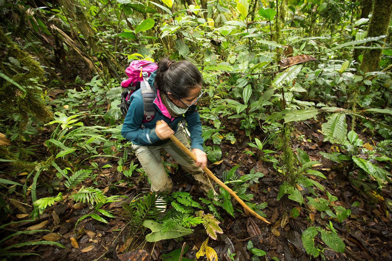 A volunteer inspects the forest floor