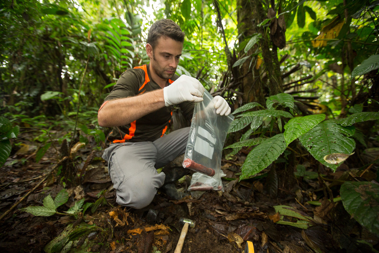 A researcher collects a sample from the forest and places it into a ziplock bag