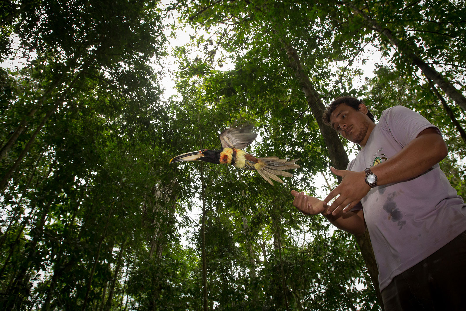 A researcher releases a bird back into the forest