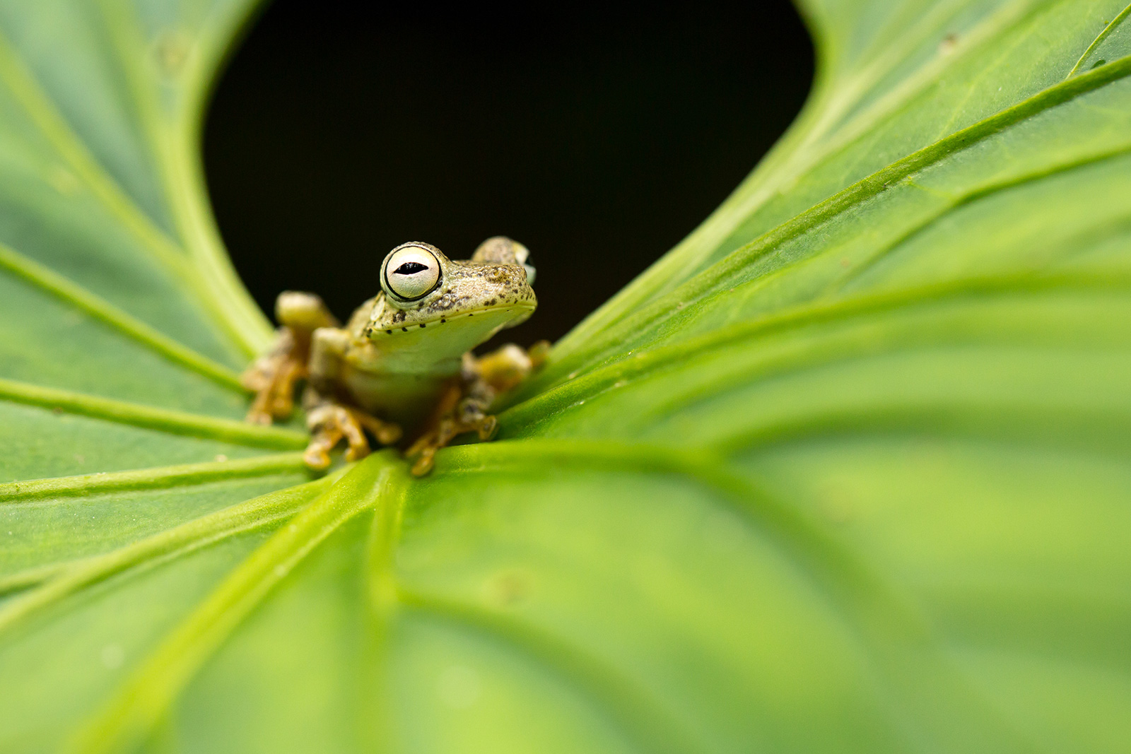 A small frog rests inside a large leaf