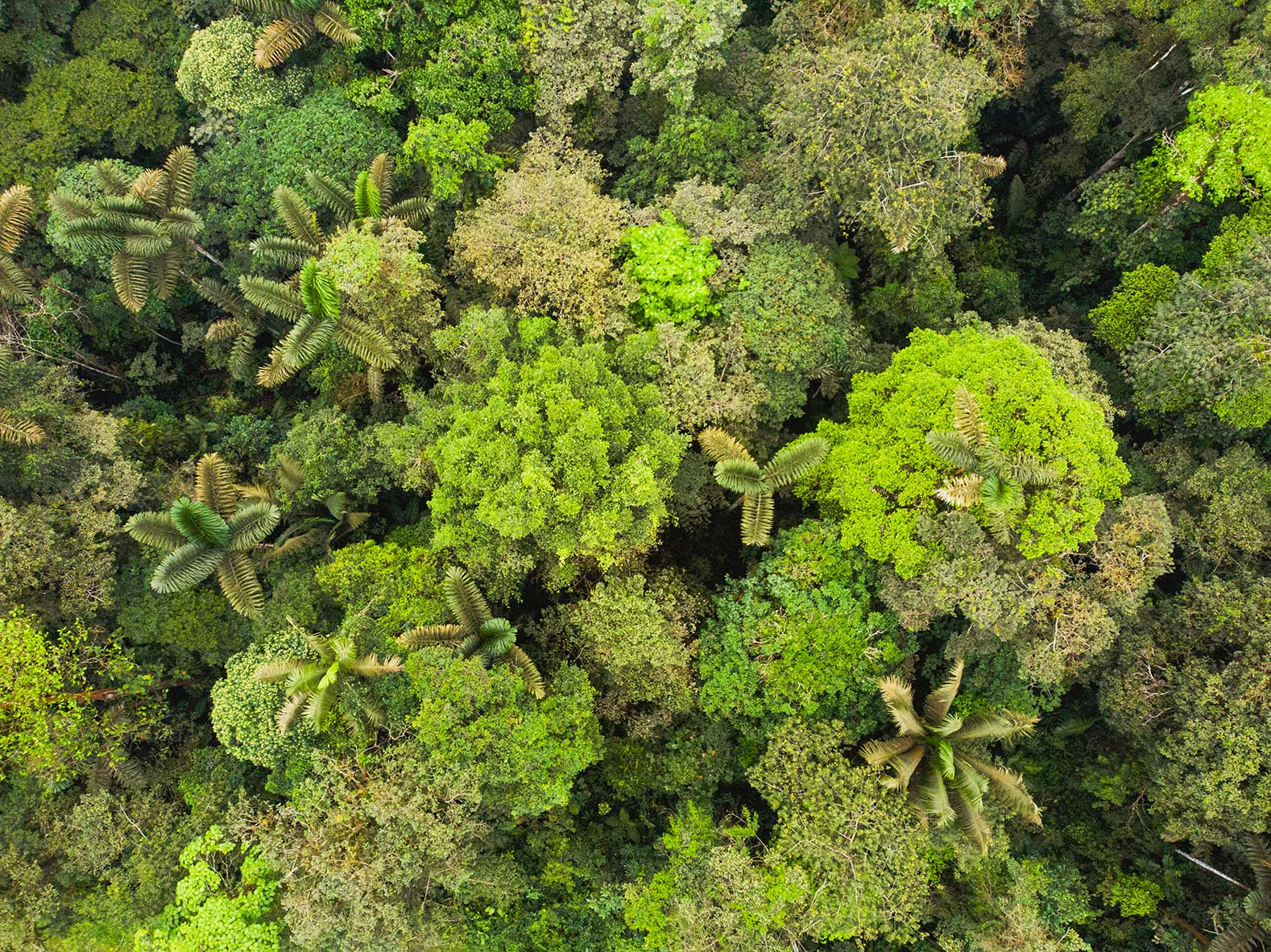 An overhead view of the diverse tree canopy