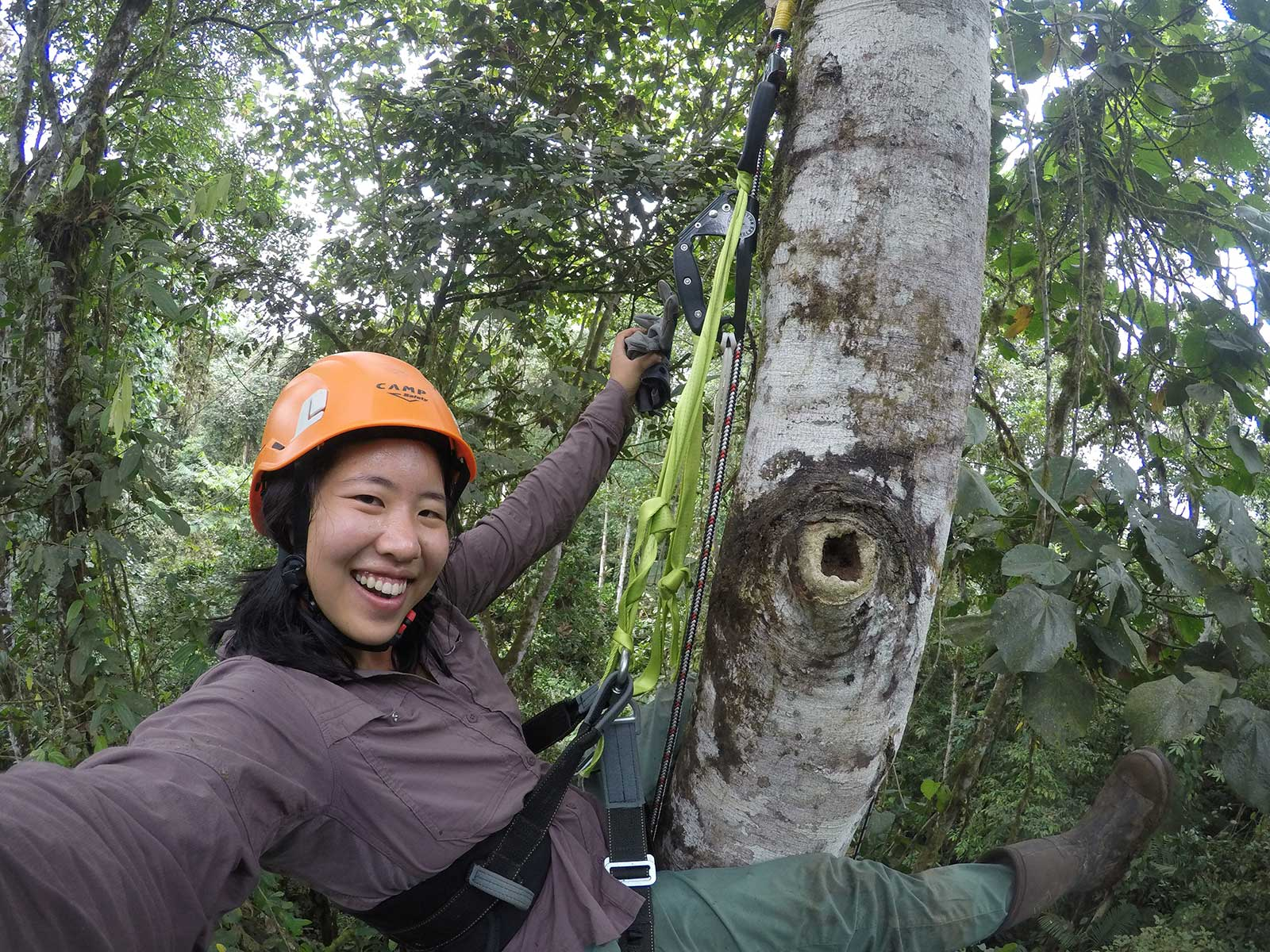 A smiling volunteer climbs a tall tree in the forest