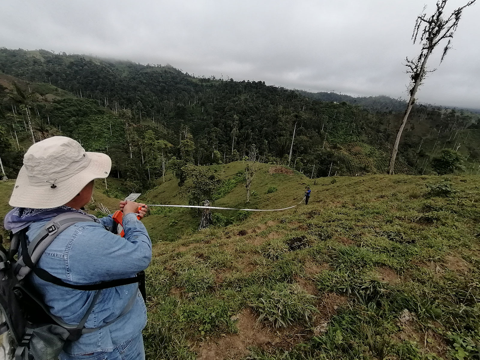 Two researchers measure a large distance where trees have been cleared from the forest