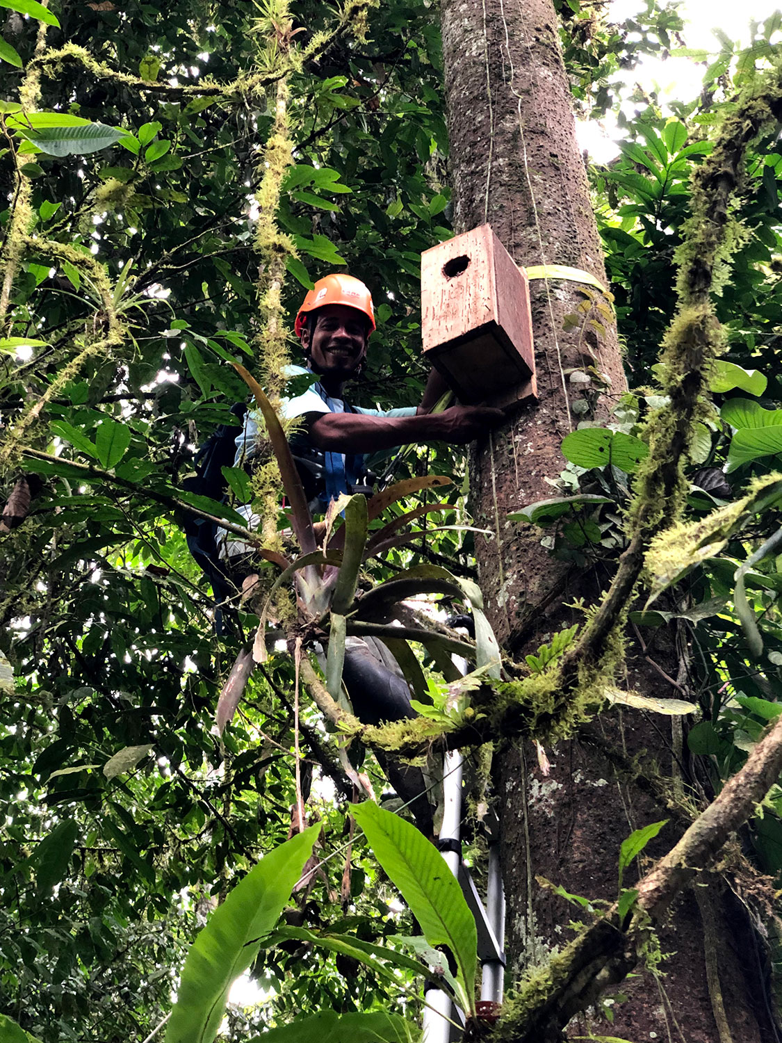 A researcher installing a birdhouse on a tree