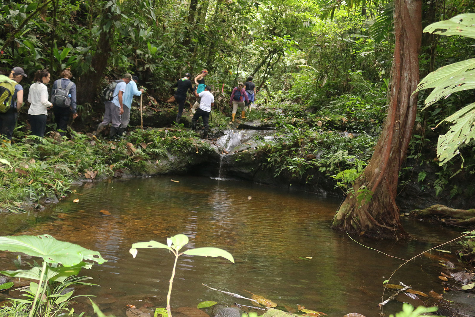 A group passes a stream while hiking on a trail through the forest