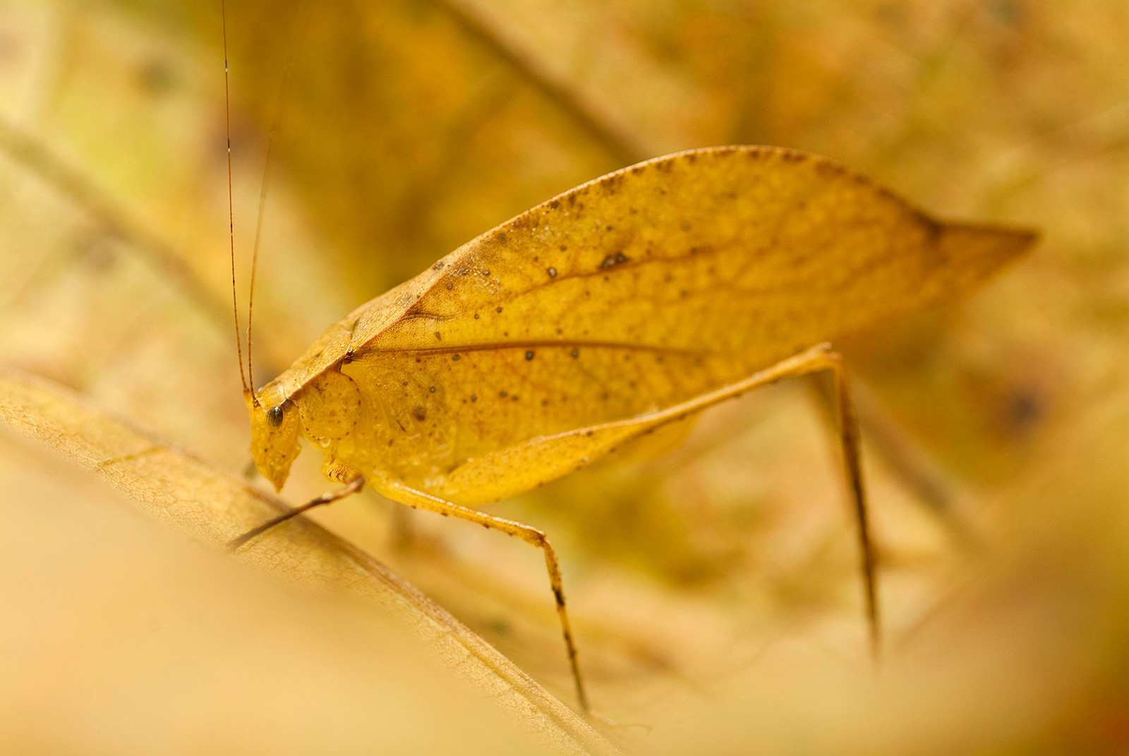 A well-camouflaged insect rests on a leaf
