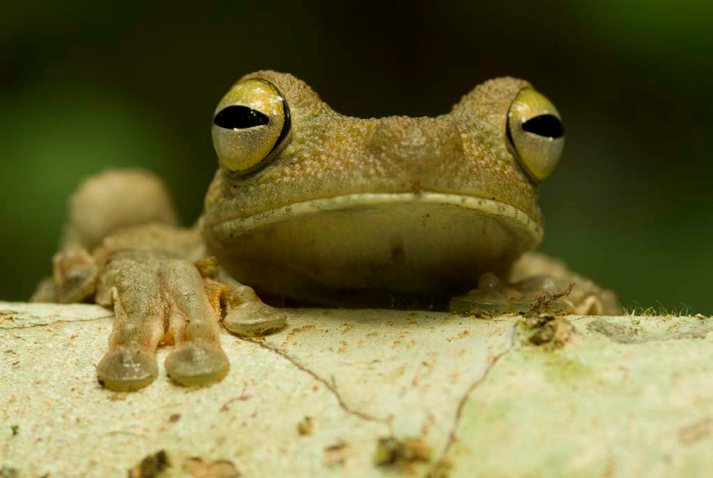 A frog peeks over a branch