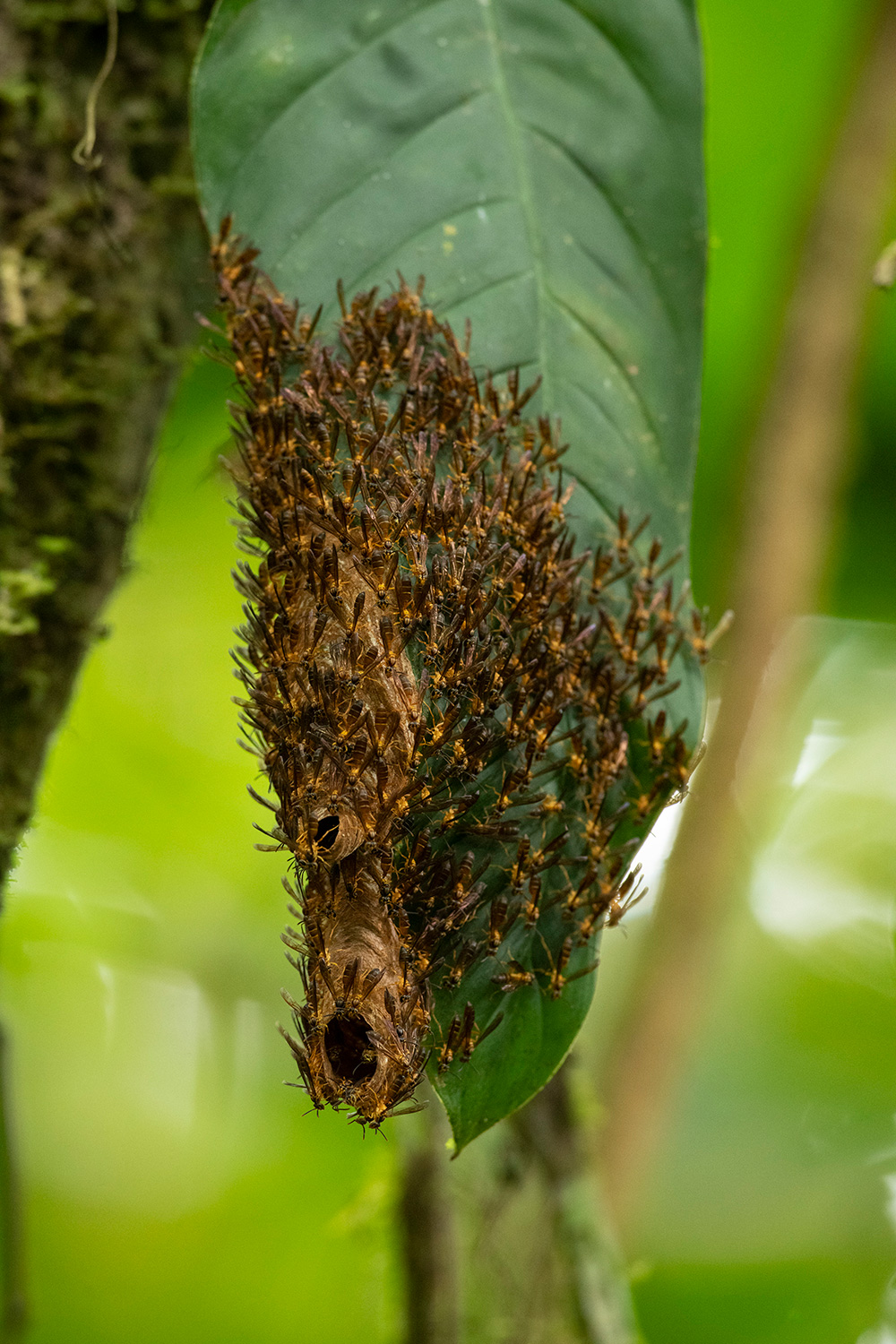 A large group of winged insects cover the end of a large leaf