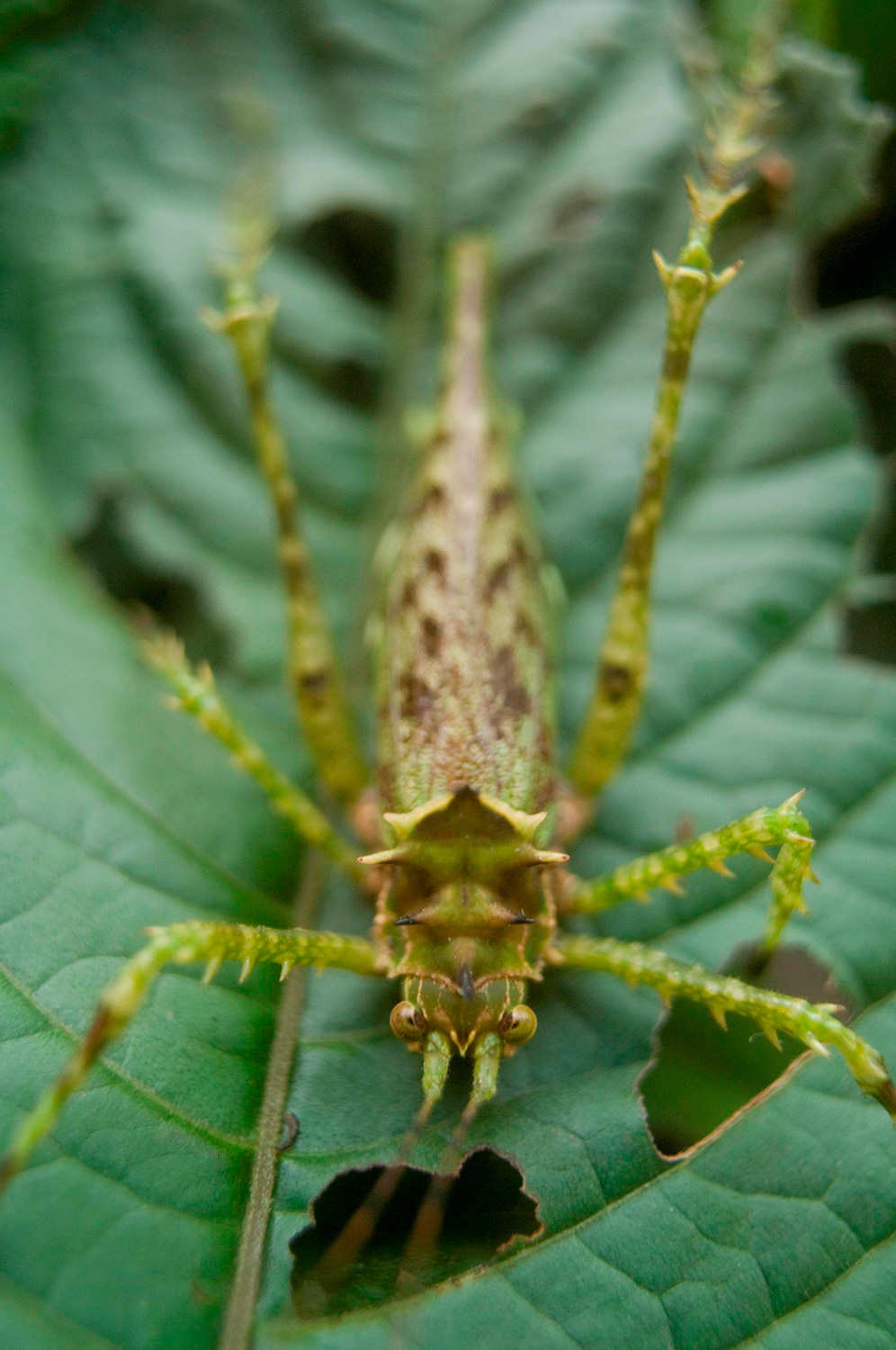 A large spiny insect with many legs