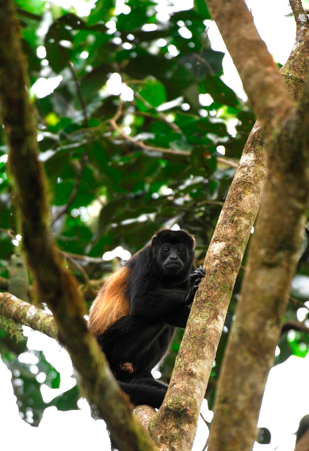 A monkey standing on a tree branch