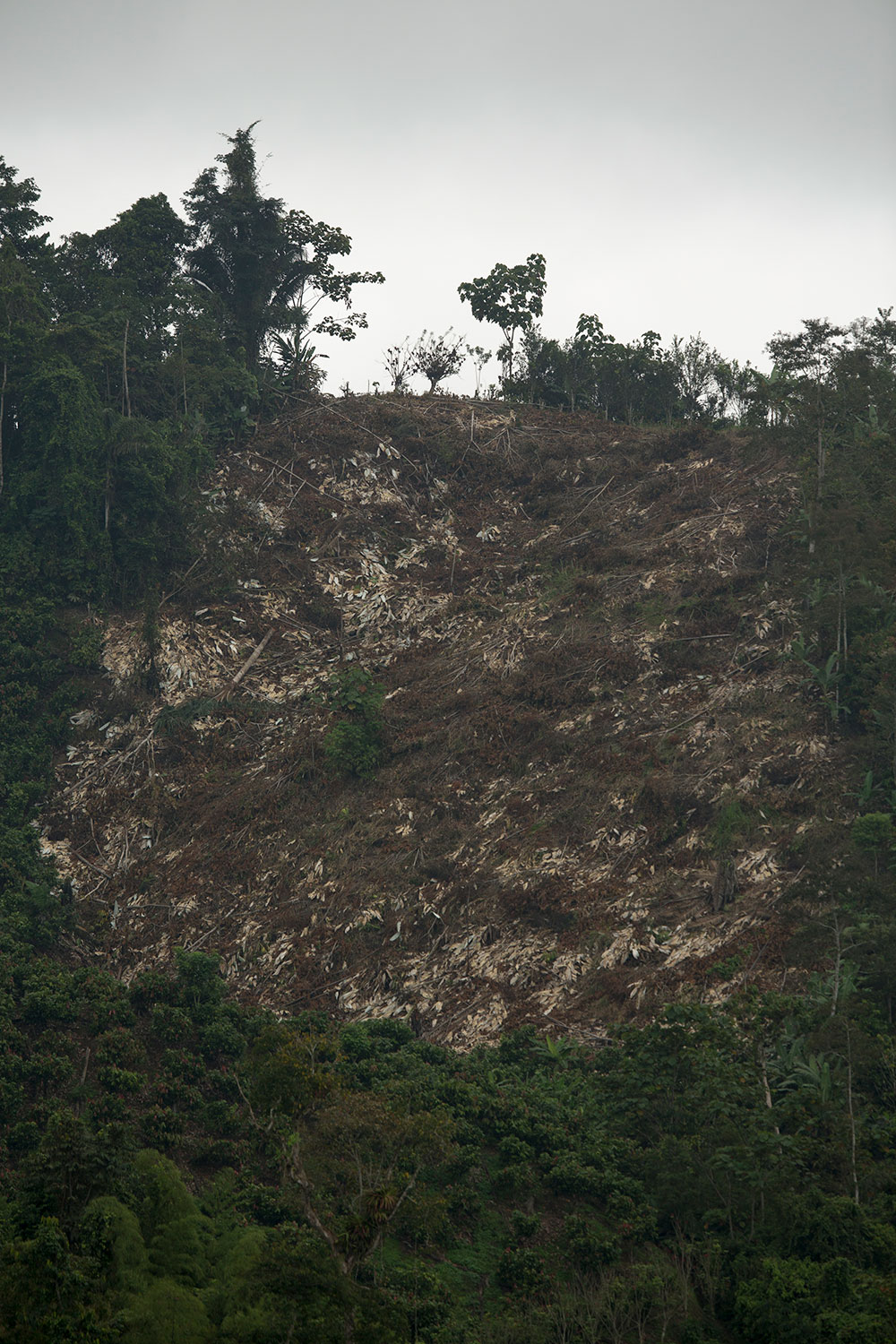 A steep hillside that has been deforested