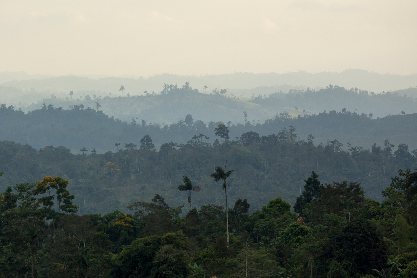 A distant view of the hilly forest landscape