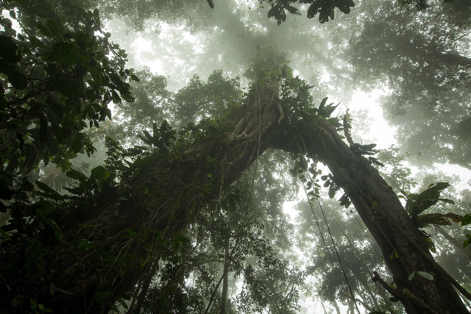 A view of the forest canopy
