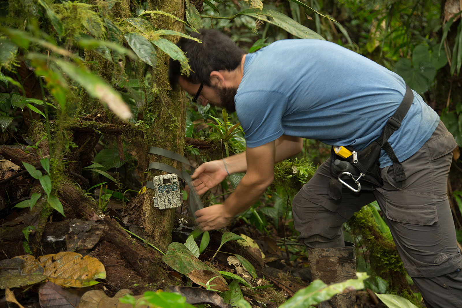 Researcher securing equipment to base of small tree